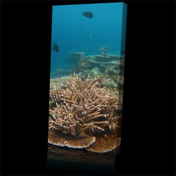Sea_coral_garden_tree500b