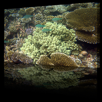 Coral_reef_fishes_sea_life500b