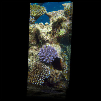 Sea_coral_reef_colour500b