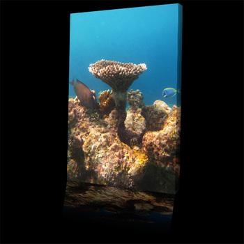 Sea_coral_garden_plateau500b