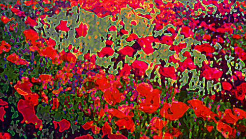 Poppies_final_email