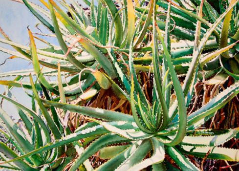 20120108162417-aloes