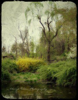 Paula_s-gardenweb