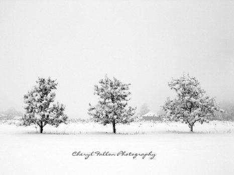 Winter-trioweb