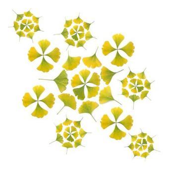 Ginko_pattern
