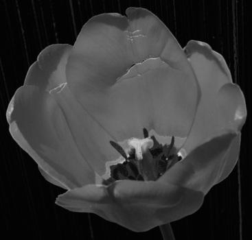 Reflower2d