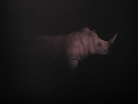 Rhinoceros_20