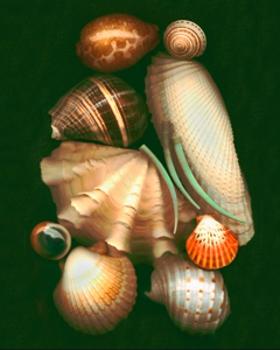 Shells2_300ppi72