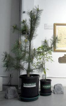 Portableforest1