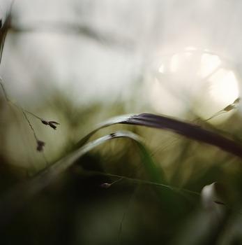 Blades_of_grass_