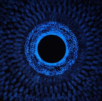 Oculus__in_the_dark_