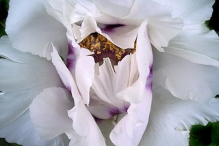 Hollis_botanicwhite_23x23