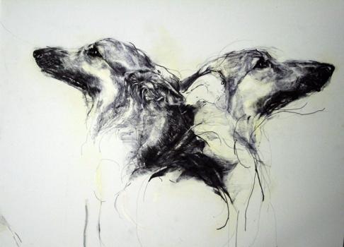 Dog24web