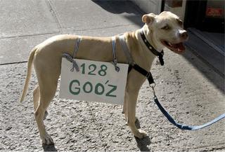 Goo_z