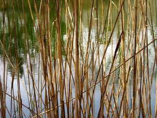 Roz-reeds-for-web