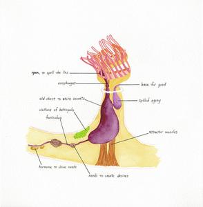 Ectoprocta