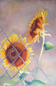Fenced_sunflowers_96_6_x_3