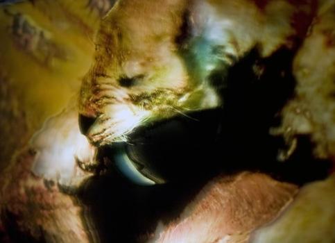 E_irving_becoming_animal