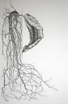 Leaf_w-roots_03