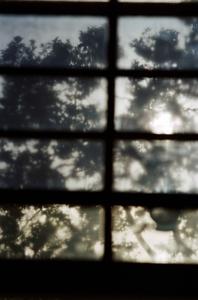 Eric_s_window___1___beverly_hills