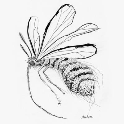 Bug_003