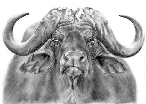 20110308110030-a05-water-buffalo-23x16