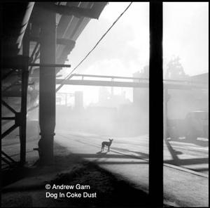 Dog_in_coke_dust__cr