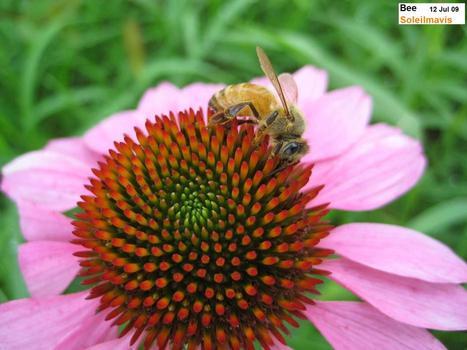 Bee__6_