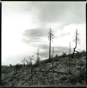 Burned_trees-prescott_forest-_az_copy
