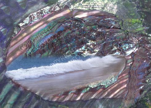 019_seashell