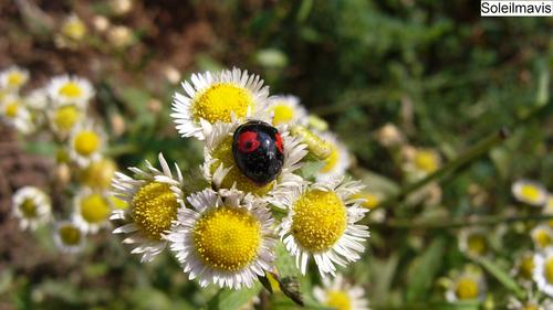 Ladybug__2_