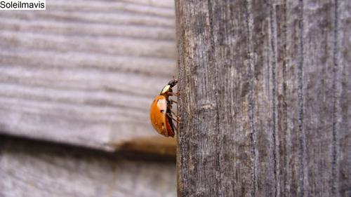 Ladybug__3_
