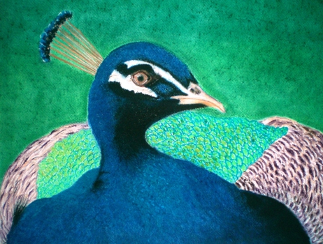 Peacock_closeup