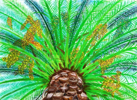 Palm_tree_close-up
