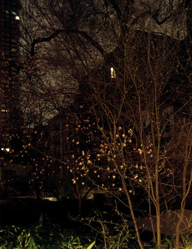 Kaufman_lisbeth_nighttrees_17x22_photograph