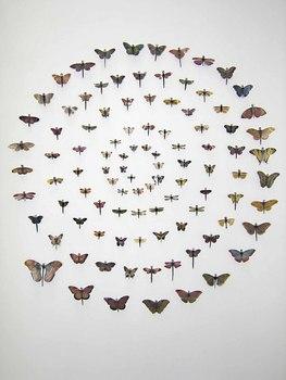 Mora-_specimens