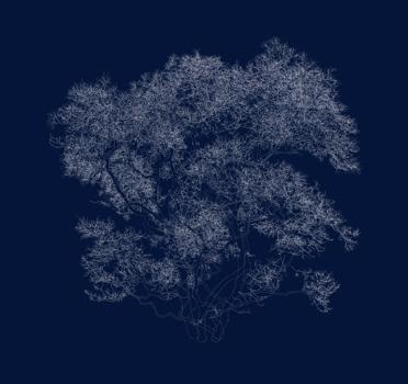 _star_magnolia_