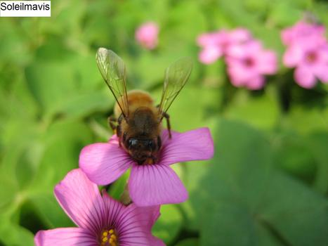 Bee__2_