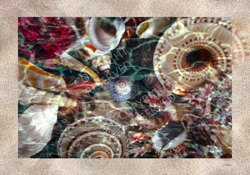 0wet_shells-sand