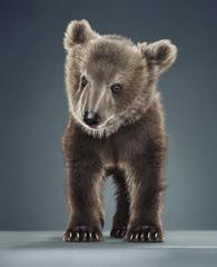 Postcard_baby_bear