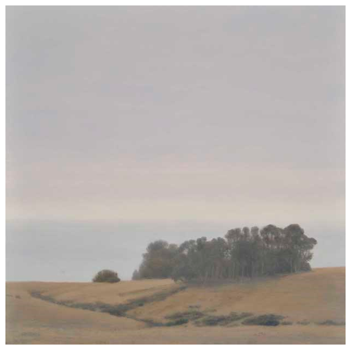 Eucalyptus_grove