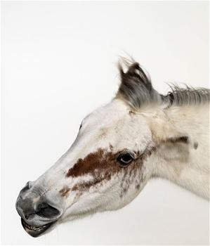 An-horse