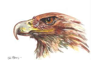 Eagle_wc