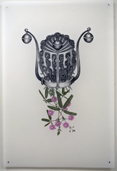 Joscelyn-gardner-mimosa-pudica_-_yabba_