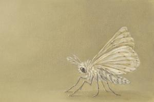 Moth_jpeg_3