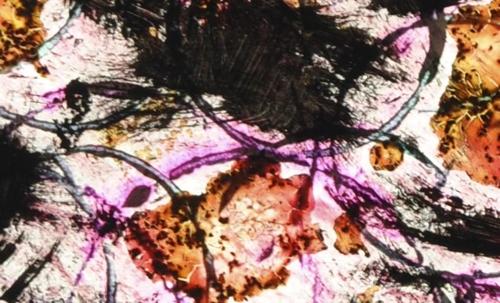 Burning_violet_amber_umber_tbschenck