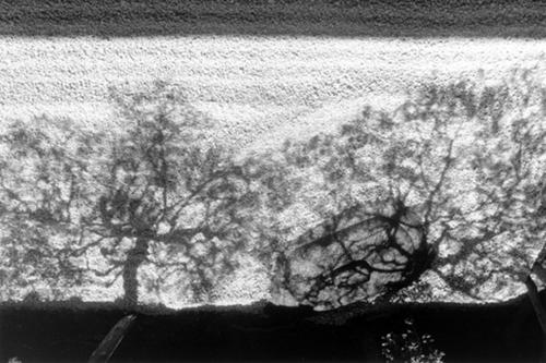 Ombres_a_kyoto_japon_1986