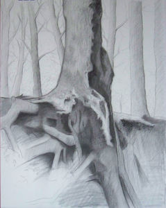 Tree_base_roots