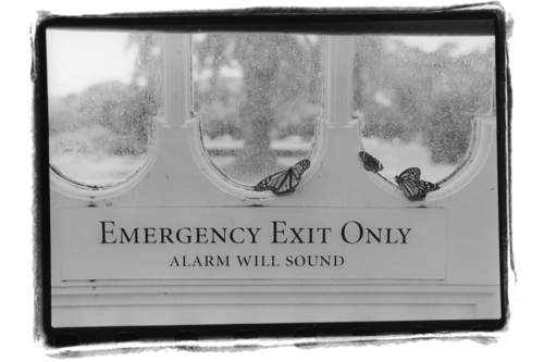 Alan_kornfeld_emergency_exit_only_2_