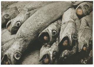 Fish_balls_